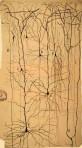 Neuronas piramidales dibujadas por Cajal