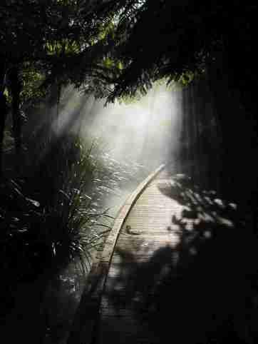 camino hacia la luz